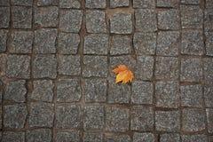 Pomarańczowy liścia klonowego lying on the beach na avement Fotografia Stock