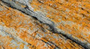 Pomarańczowy liszaj na wielkiej skale obraz stock