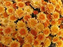 pomarańczowy mamami żółty Obraz Stock