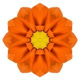Pomarańczowy mandala Gerbera kwiatu kalejdoskop Odizolowywający Zdjęcie Royalty Free