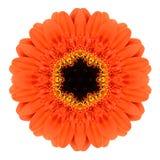 Pomarańczowy mandala Gerbera kwiatu kalejdoskop Odizolowywający Fotografia Royalty Free