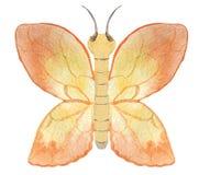 Pomarańczowy motyl na białym tle royalty ilustracja