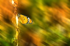 Pomarańczowy motyl na roślinie, w górę motyla, plama ruchu tło fotografia stock