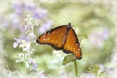 Pomarańczowy motyl w ogródzie na purpurowych kwiatach zdjęcia stock