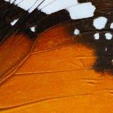 Pomarańczowy motyla skrzydło Obraz Stock