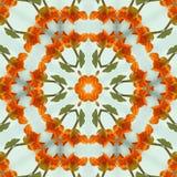 Pomarańczowy nasturcja kalejdoskop Obrazy Stock
