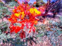 Pomarańczowy okwitnięcie kwiat Obrazy Royalty Free