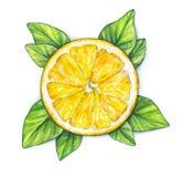 Pomarańczowy owocowy dojrzały z zielonymi liśćmi handwork owoce tropikalne zdrowa żywność akwarela Zdjęcia Royalty Free
