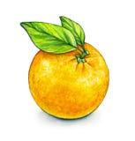 Pomarańczowy owocowy dojrzały z zielonymi liśćmi handwork owoce tropikalne zdrowa żywność akwarela Obrazy Stock