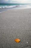 Pomarańczowy seashell na piasku przy Kuba plażą Obrazy Stock