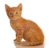 pomarańczowy siedząc tabby kociaki Fotografia Stock