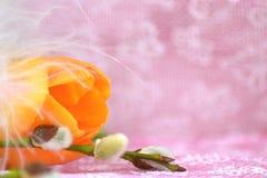 Pomarańczowy tulipan i gałąź wierzba kłamamy na stole S fotografia royalty free