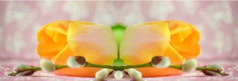 Pomarańczowy tulipan i gałąź wierzba kłamamy na stole S zdjęcie royalty free