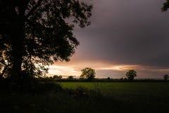 Pomarańczowy zmierzch nad polami Yorkshire w północy Anglia z sylwetką wielki drzewo w przedpolu obraz stock