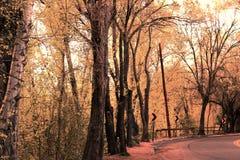 Pomarańcz barwioni drzewa Obraz Stock