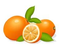 Pomarańcze ilustracji