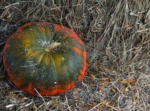 Pomarańcze i zieleni bania na sianie Obrazy Royalty Free