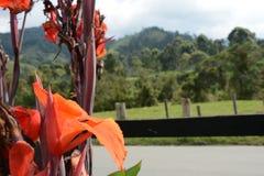 pomarańcze kwitnie w drodze Fotografia Stock