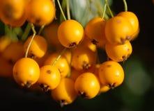pomarańcze lato Obraz Royalty Free