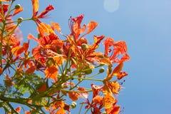 Pomarańcze niebieskie niebo i kwiaty Zdjęcia Royalty Free