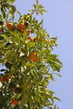 pomarańcze niebo Zdjęcia Royalty Free