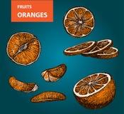 Pomarańcze - set wektorowa ilustracja Zdjęcia Royalty Free