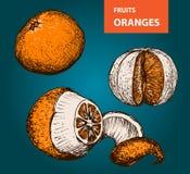 Pomarańcze - set wektorowa ilustracja Fotografia Royalty Free