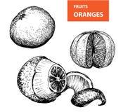 Pomarańcze - set wektorowa ilustracja Obrazy Royalty Free