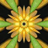 Pomarańcze wiosny zielony kalejdoskop Zdjęcia Stock