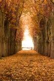 Pomarańczowa jesieni i spadku lasu droga przemian Obrazy Royalty Free