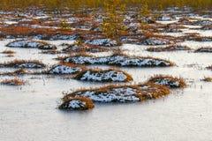 Pomarańczowa trawa na bagnie w zimie Obrazy Royalty Free