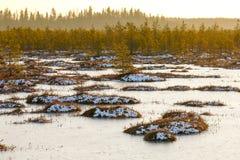 Pomarańczowa trawa na bagnie w zimie Zdjęcie Stock