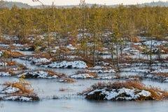 Pomarańczowa trawa na bagnie w zimie Obrazy Stock