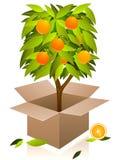 pomarańczowego drzewa wektor Obraz Royalty Free