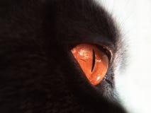 Pomarańczowi kotów oczy na czarnym tle Obraz Stock