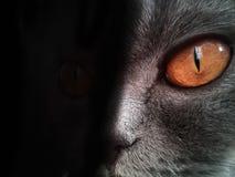 Pomarańczowi kotów oczy na czarnym tle Fotografia Royalty Free