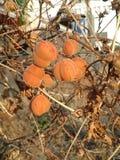 Pomarańczowi odcienie Obrazy Royalty Free