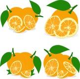 Pomarańczowi plasterki, kolekcja ilustracje Zdjęcie Royalty Free