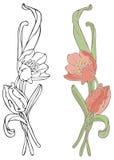 pomarańczowi tulipany Zdjęcia Royalty Free
