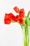 Pomarańczowi tulipany w szklanej wazie Zdjęcie Royalty Free