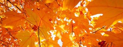Pomarańczowy abstrakt Obraz Stock