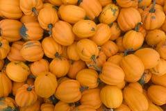 Pomarańczowy acorn kabaczek Obraz Stock