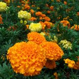 Pomarańczowy colour zdjęcie stock