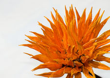 Pomarańczowy drewniany kwiat obraz stock