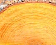 pomarańczowy drewno Obraz Royalty Free