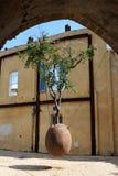 pomarańczowy Jaffa TARGET2319_0_ drzewo Fotografia Stock