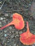 Pomarańczowy koloru kwiat Fotografia Stock