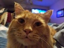 Pomarańczowy kot zdjęcie royalty free