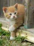 Pomarańczowy kot Fotografia Royalty Free