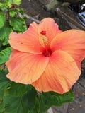 Pomarańczowy kwiat fotografia royalty free